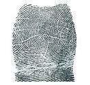 Ce que disent les empreintes digitales quand lesempreintes se forment elles1 - Ce que disent les empreintes digitales: Quand les empreintes se forment-elles?