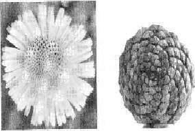 Le modèle de turing des marguerites et des canons - Le modèle de Turing: des marguerites et des canons