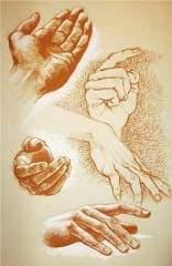 Les carottes ne sont pas des sphères les petits bras et les gros bras2 - Les carottes ne sont pas des sphères : les petits et les gros bras