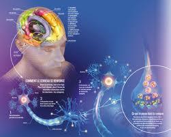 134 - Le cerveau et la pensée : L'existence d'un centre superieur