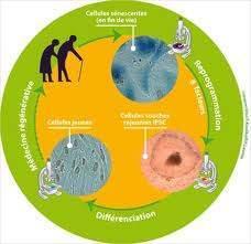 163 - Les facteurs du vieillissement : Le facteur génétique