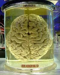 1119 - La mémoire du temps passé : L'homme au cerveau éclaté