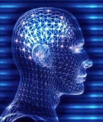157 - Les rythmes humains : La construction du cerveau