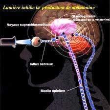 161 - Les rythmes humains : La mélatonine ,l'hormone donneuse de temps