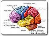 les mécanismes de la plasticité neuronale - les mécanismes de la plasticité neuronale