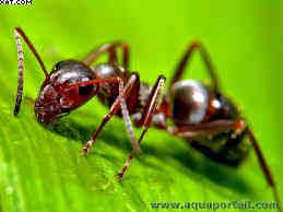 Les fourmis - Des plantes et des bêtes : Fourmi cro-ondes