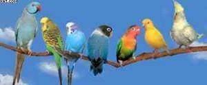 Les oiseaux. 300x124 - Des plantes et des bêtes : Porte-bonheur