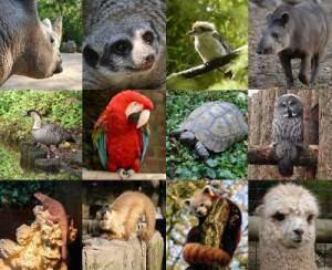 tout savoir sur les animaux 300x244 - Tout savoir sur les animaux