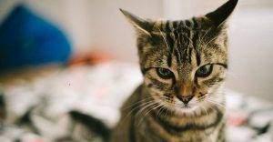 Le stress chez les animaux 300x156 - stress chez les animaux