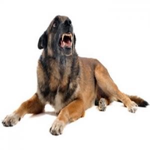 comportement1 300x300 - Comportement agressif