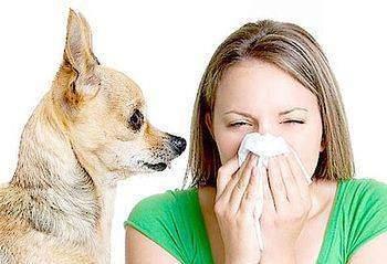 Allergies dues aux animaux - Allergies dues aux animaux