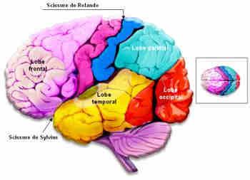 Epilepsie - Epilepsie