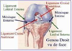 Les lesions ligamentaires - Les entorses du genou