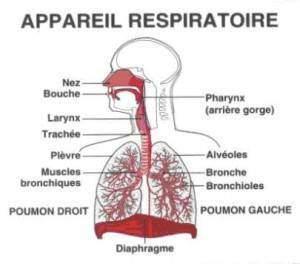 maladie appareil respiratoire 300x264 - Maladie respiratoire