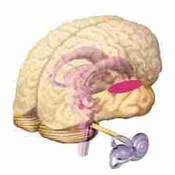 Les-effets-de-l-age-sur-les-differentes-modalites-sensorielles-et-activites-perceptives-l-audition