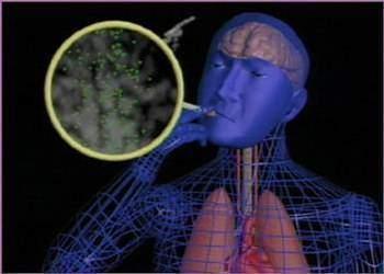 Comment la nicotine penetre t elle dans I organisme - Comment la nicotine pénètre-t-elle dans I'organisme?
