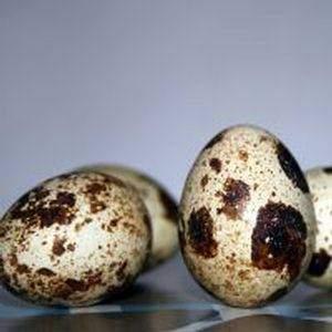 L asthmatique et les œufs de caille - L'asthmatique et les œufs de caille