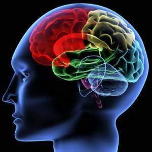 Cerveau-sexe-et-politique-bequilles-cerebrales-et-dopage-humain