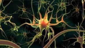 Système nerveux végétatif et rythmes 300x168 - Système nerveux végétatif et rythmes