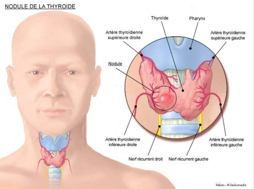Hormones et vieillissements Les hormones thyroidiennes1 - Hormones et vieillissements : Les hormones thyroïdiennes