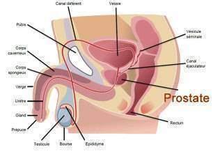 Ejaculer-souvent-preserve-t-il-du-cancer-de-la-prostate?