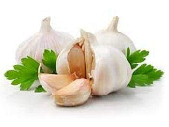 Bienfaits-de-l-ail-Allium-sativum